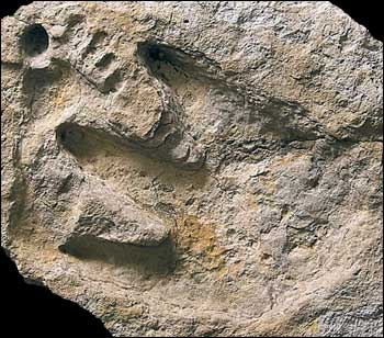 Creationists Doubt Dinosaur and Human Tracks Found Together