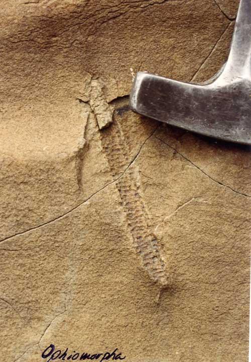 Difunta Sandstone Ophiomorpha