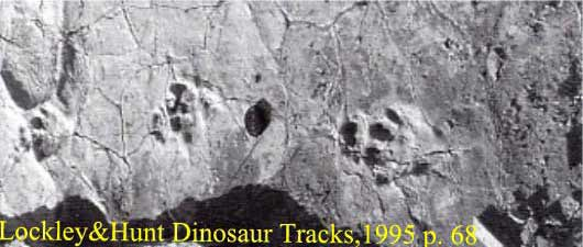 Triassic Desciccation Cracks