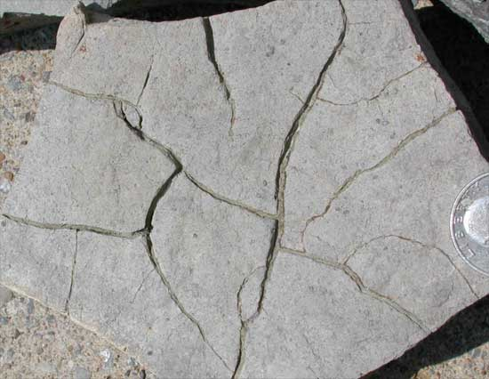 Permian Desciccation Crack