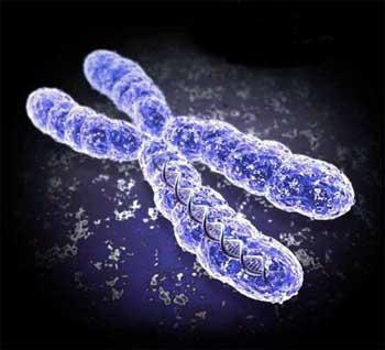 Intelligent Design, Chromosomes and Genes