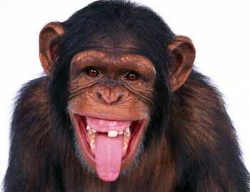 Top 3 Things About Evolution That Revolt Creationists The Most