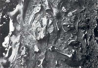 fossils preserved in tar